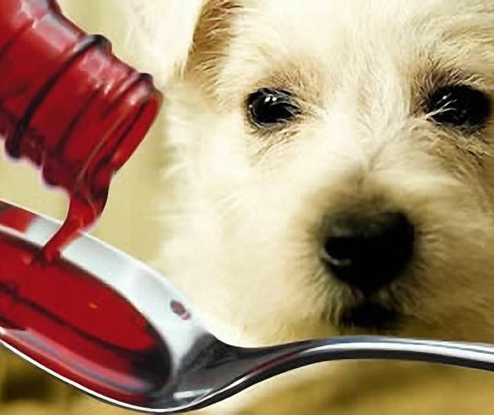 Perigos ao medicar os pets sem prescrição veterinária