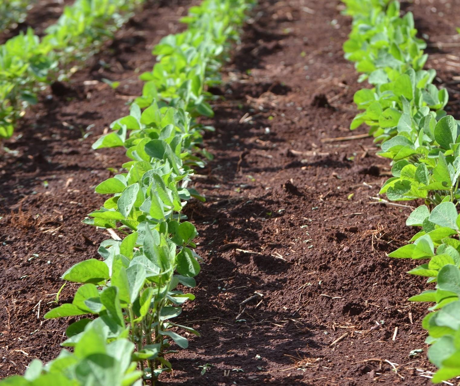 Plantio de soja 2020/21 do Paraná avança 8 pontos na semana, mas segue atrasado