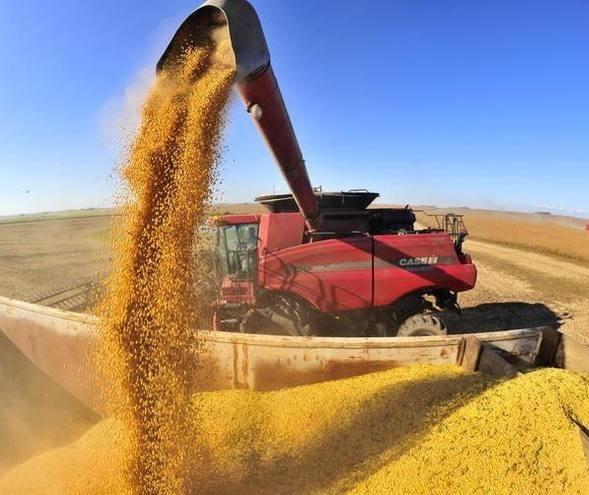 Quebra da safra argentina melhora cotação da soja brasileira