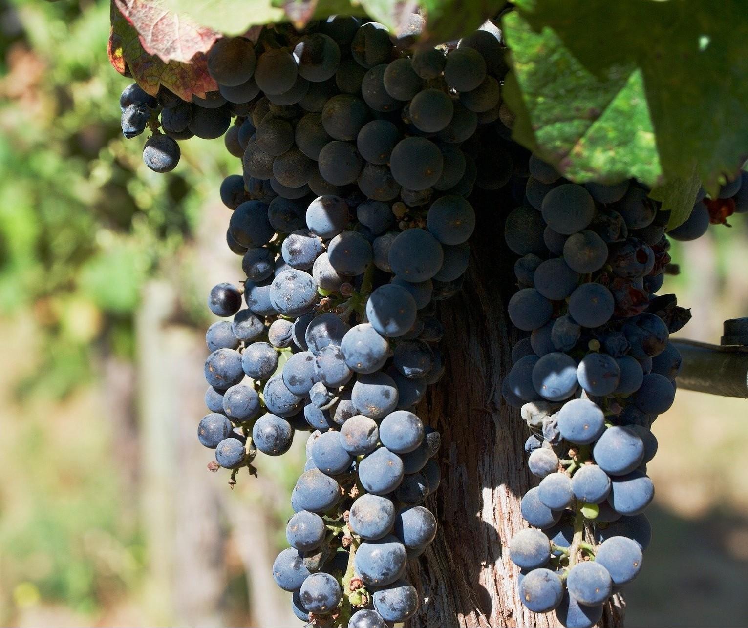 A relação dos chilenos com o vinho