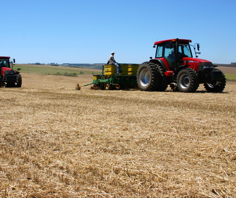 Plantio de trigo no estado está atrasado