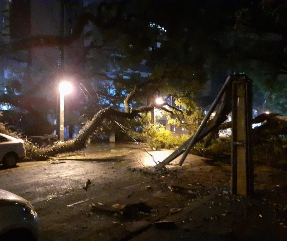 Vídeo: morador escapa por pouco de queda de árvore