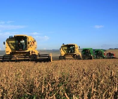 AgRural: colheita de soja atinge 31% da área no Brasil