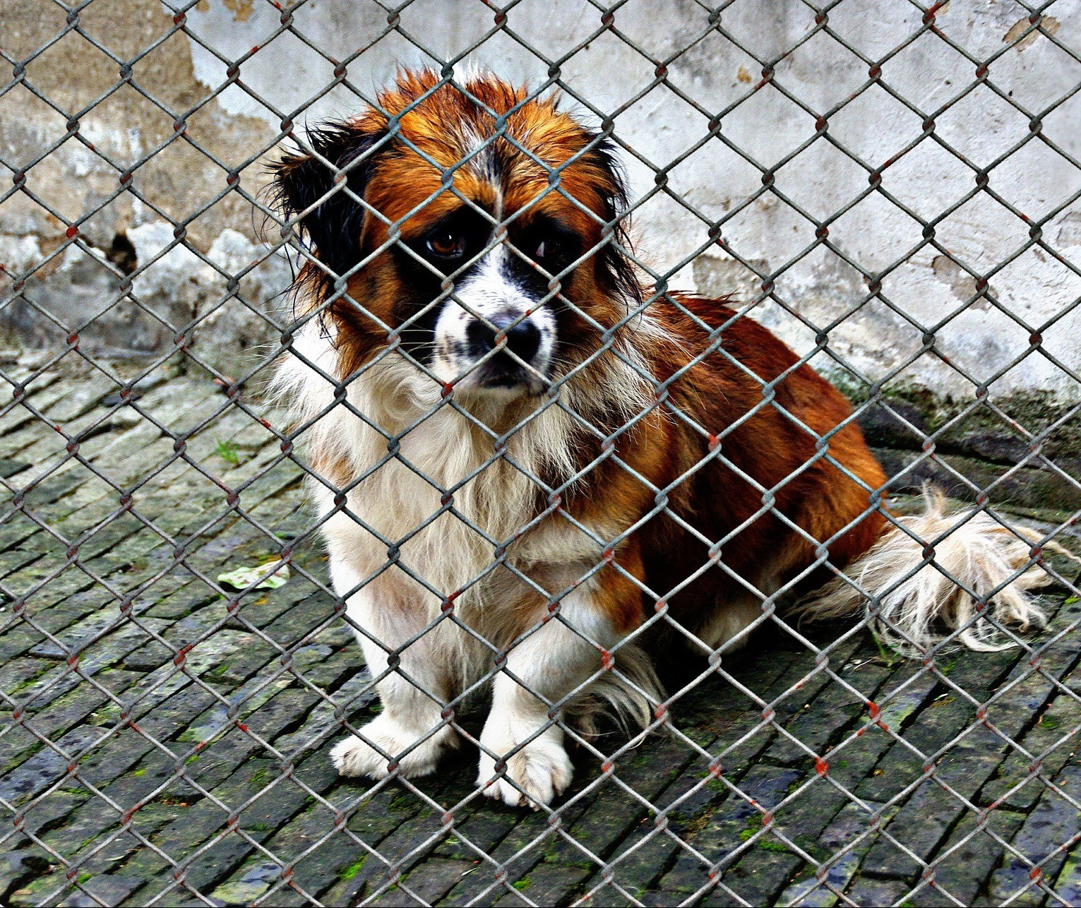 Lei que pune maus-tratos a animais com prisão teve contribuição de maringaenses