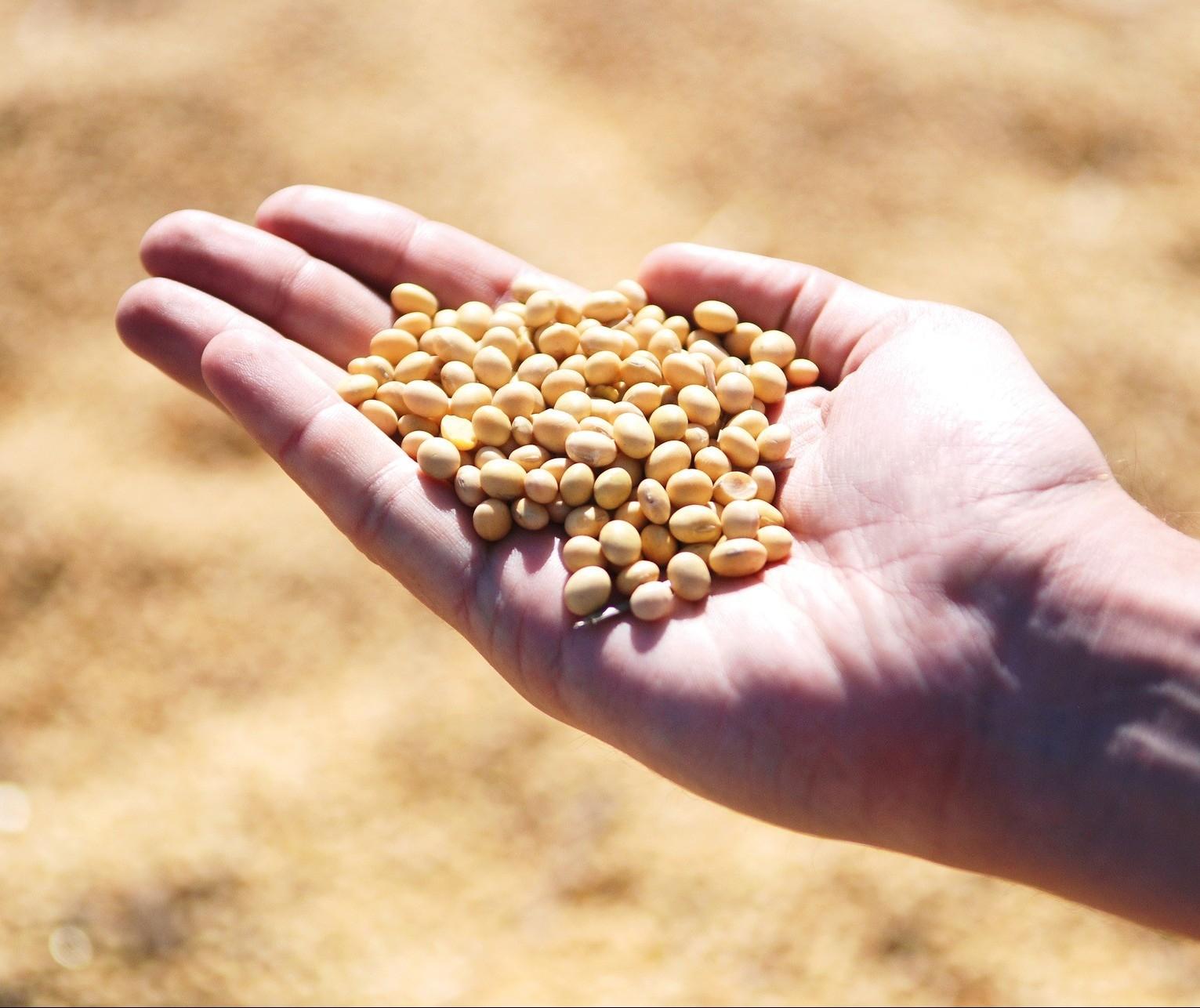 Exportação de soja do Brasil alcança 12,2 mi toneladas no mês e já supera maio de 2019