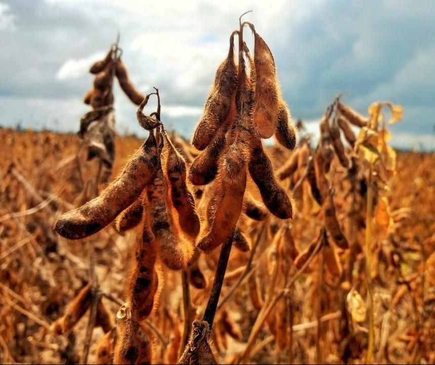 Preço da soja aumenta devido a disputa entre EUA e China