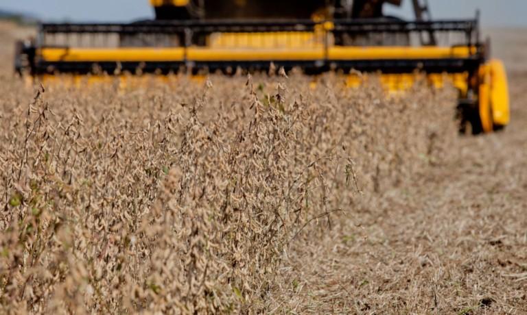 Colheita de soja brasileira começa se emparelhar com os patamares normais