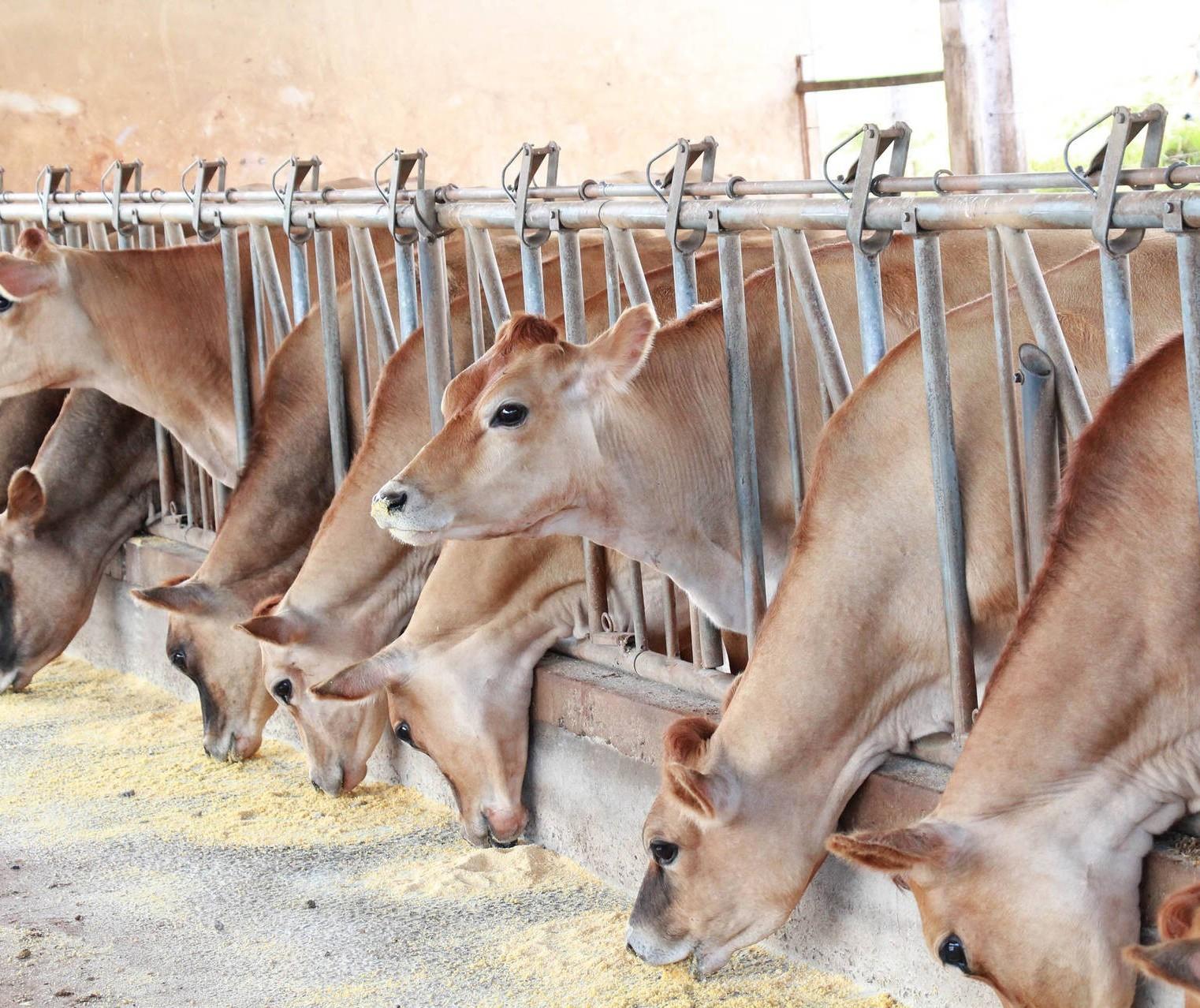 Pandemia prejudica exportações de bovinos em pé