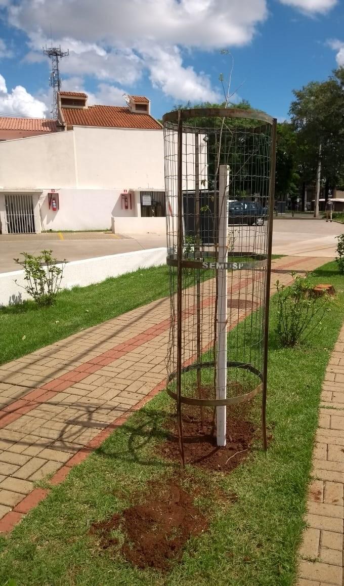 Divulgação/Semusp