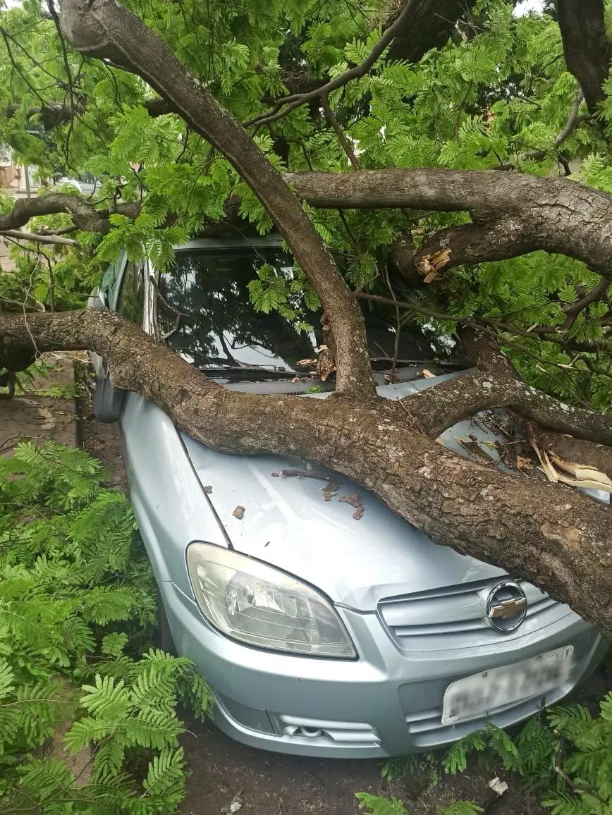 Árvore caiu sobre um carro no Residencial Branca Vieira, em Maringá. Foto: Rafaela Ferro