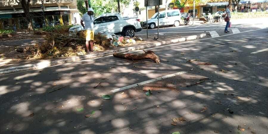 Outros galhos de árvore caíram. Foto: Bial Silva