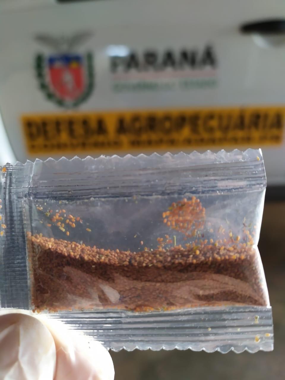 Sementes que estão sendo enviadas para o Ministério da Agricultura – Foto: Adapar