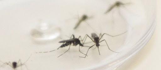 Com mais de 10 mil casos, Maringá confirma 11ª morte por dengue