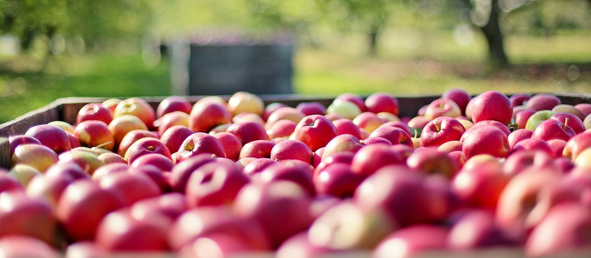 Mulheres já são 80% na agricultura familiar
