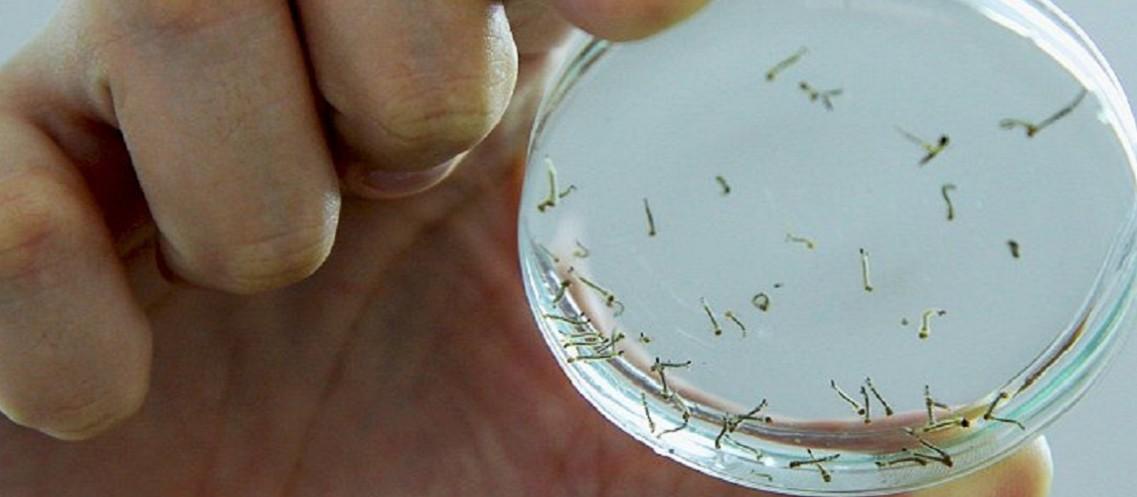 Em Paranavaí, focos de dengue podem levar à prisão