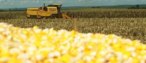 Milho brasileiro perde competitividade com relação ao americano, mas cenário ainda não é definitivo