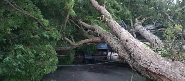 Chuva forte derruba árvores e postes em Maringá