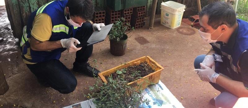 Planta que nasceu de semente da China é identificada e destruída em laboratório