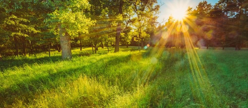 O enfoque espiritual da sustentabilidade