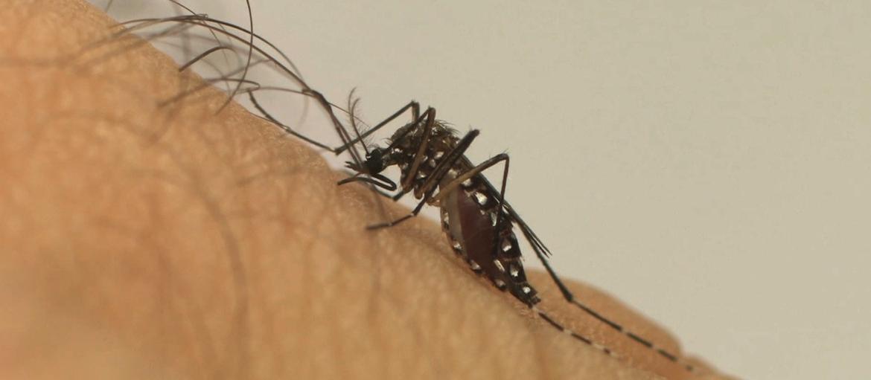 Faep/Senar-PR prepara campanha de conscientização contra dengue