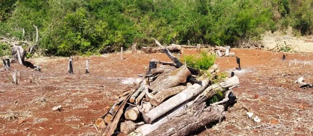Suspeito de desmatamento ilegal é preso após tentar atirar contra policiais, em Peabiru