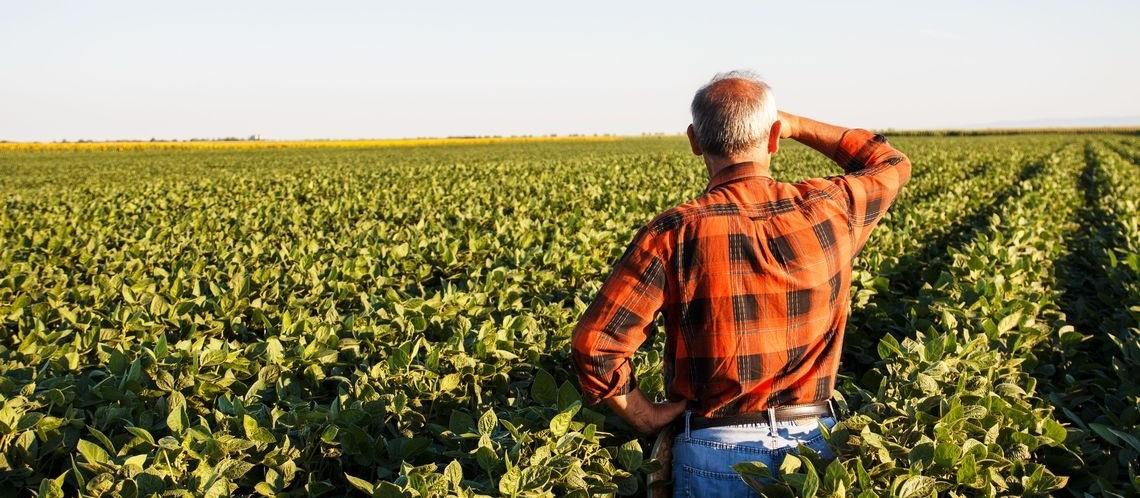 Por causa do coronavírus, produtores rurais estão aprendendo a vender sob encomenda