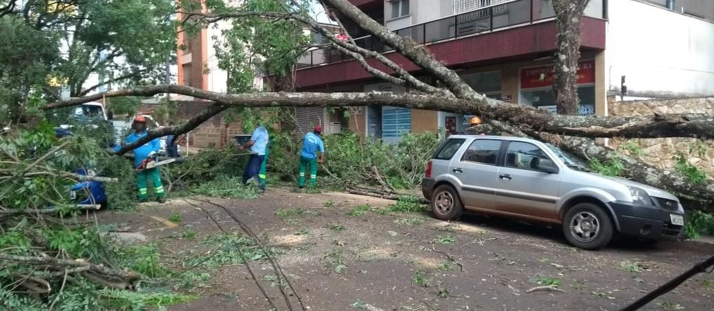 Árvore de grande porte cai e atinge 4 carros em Maringá