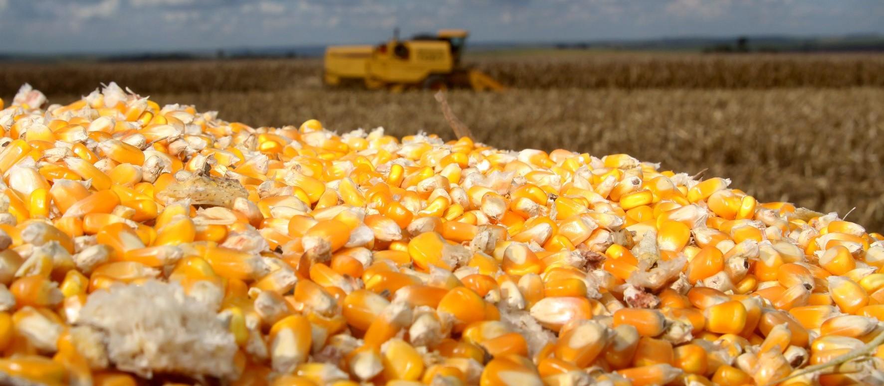 Saca do milho custa R$ 29,50 em Maringá e outras praças