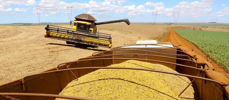Área semeada no Brasil avança pelo 11º ano consecutivo