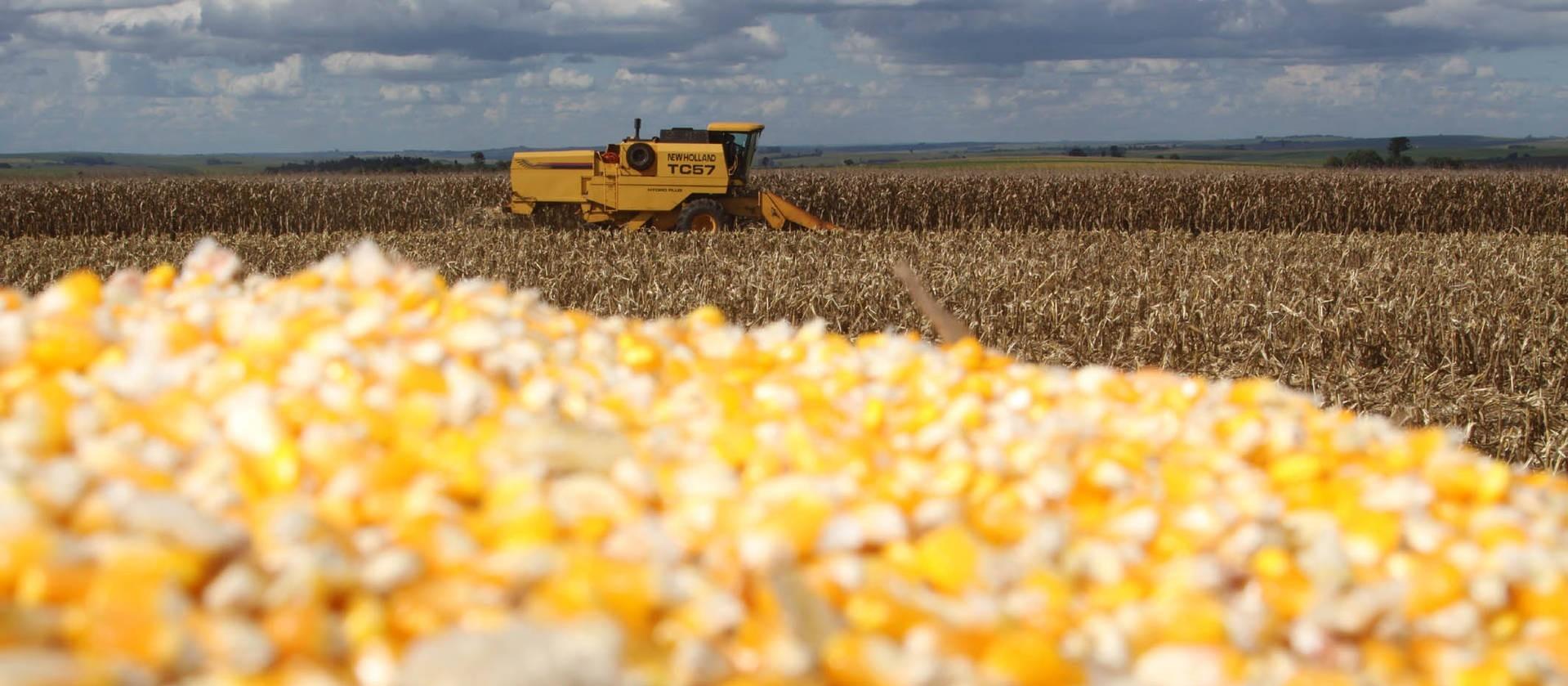 Milho abre a semana em alta e ultrapassa os R$ 101,00 na B3