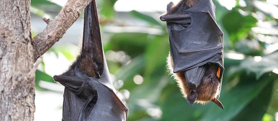 Laudo confirma vírus em morcego encontrado no cemitério municipal