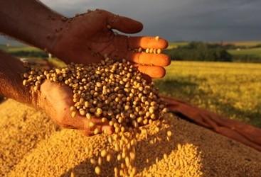 Preço da soja voltar a subir no mercado brasileiro