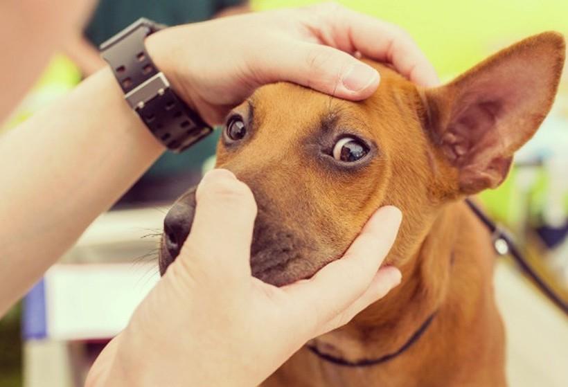 Como identificar se o seu animal está com problema de visão?