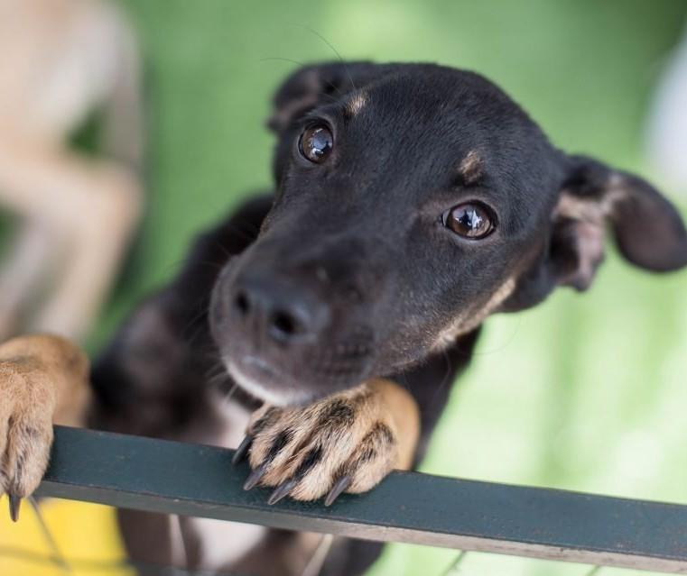Projeto de lei proíbe que se dificulte a alimentação de animais comunitários