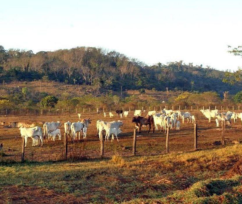 Receita Federal de Maringá estima receber cerca de 2 mil declarações de propriedades rurais