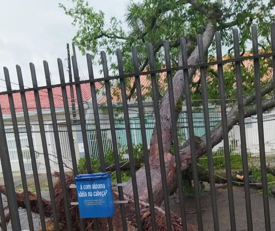 Árvore de grande porte cai e deixa UBS Mandacaru sem energia
