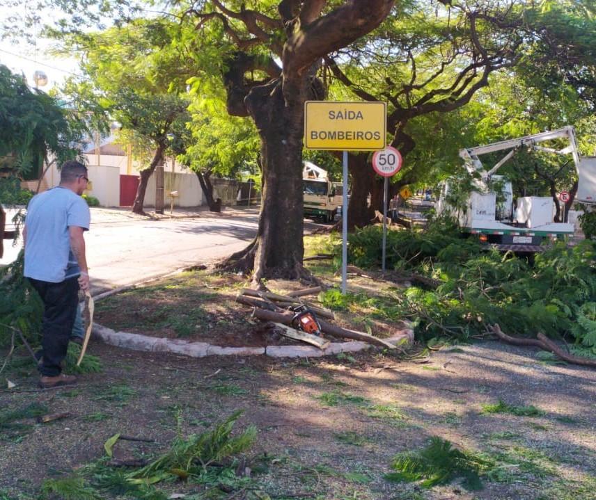 3 mil árvores precisam ser  removidas em Maringá