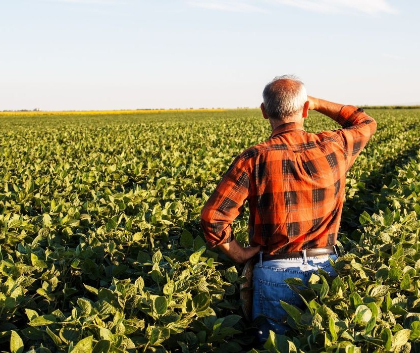 Agricultor e agricultura estão envolvidos com o coronavírus