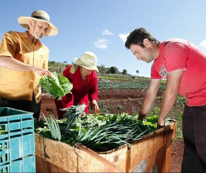 Agricultura familiar enfrenta dificuldades para renovar produtores