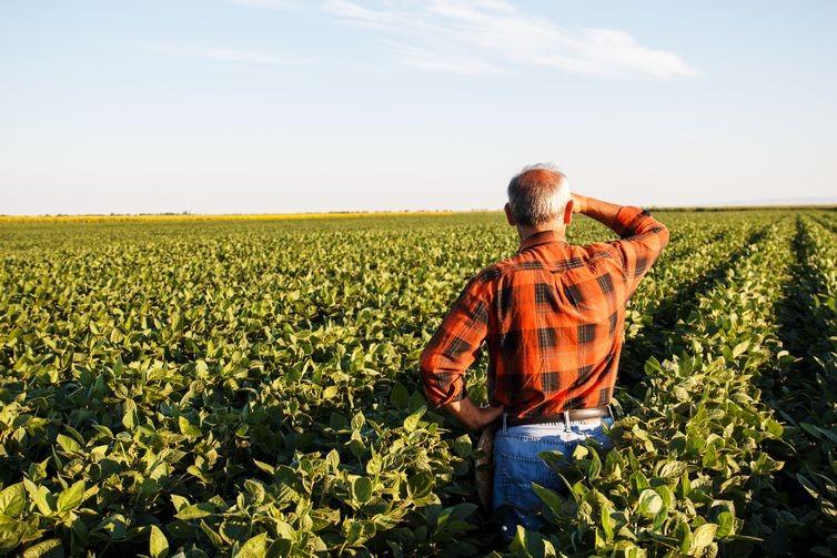 Pequena propriedade rural não pode ser penhorada para quitar dívidas, diz STF