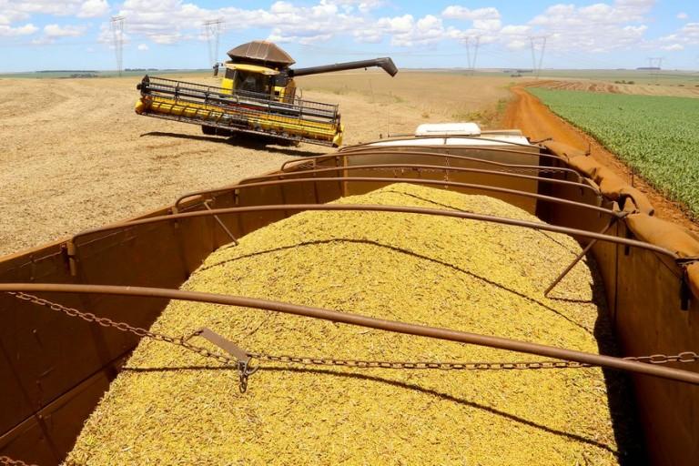 Consultoria prevê safra de soja acima dos 137 milhões de toneladas