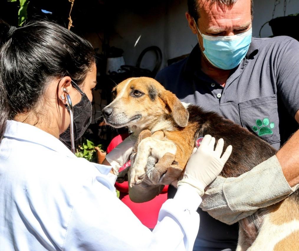 População pode adotar temporariamente um animal de estimação em Maringá