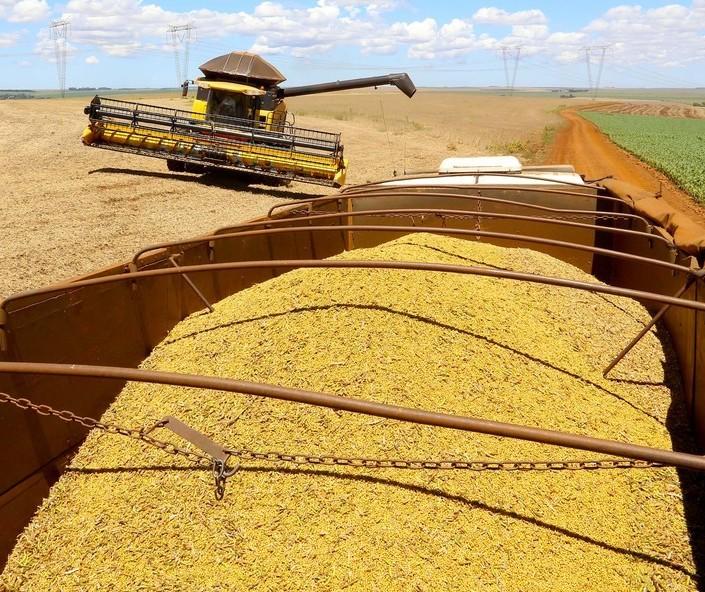 Brasil tem elevação na produção de soja, aponta Conab