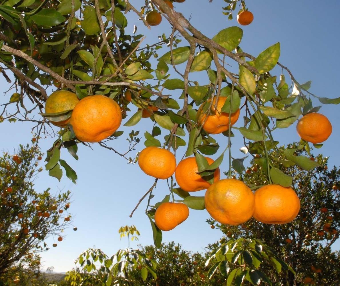 Setor de frutas comemora aumento no volume de exportações