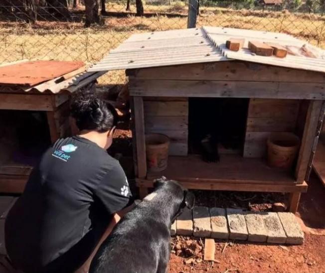 Em Maringá, 'cãodomínios' levam moradia e alimentos para cerca de 50 cães