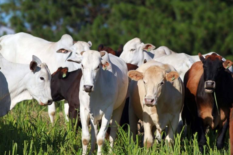 Paraná é área livre de aftosa sem vacinação