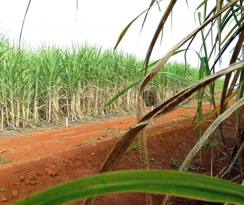 Prioridade do setor de bioenergia é suprir demanda de etanol anidro