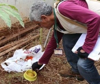 Maringá faz mutirão de limpeza contra a dengue