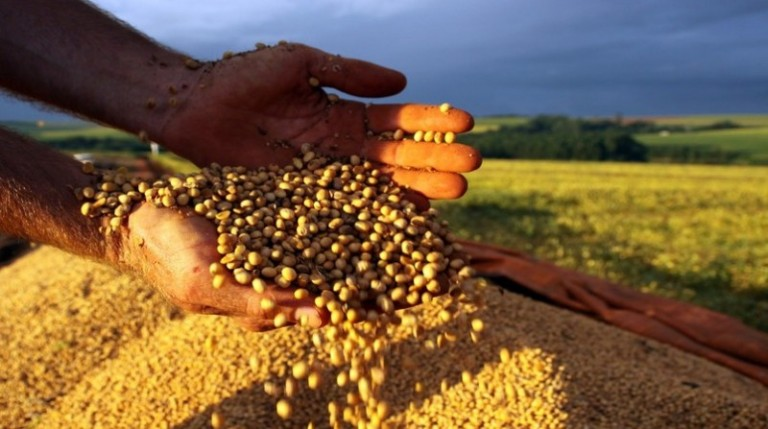 74% da soja produzida no Paraná passa por cooperativas