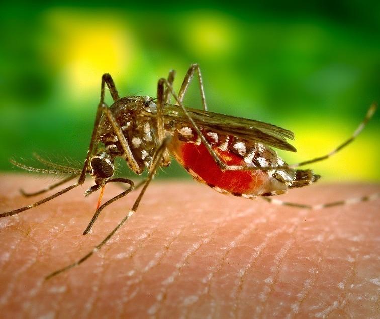 Maringá tem quase 150 casos confirmados de dengue